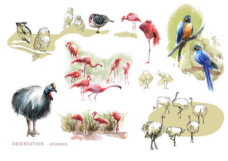 vogelobservation