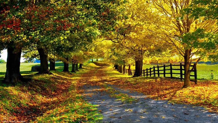 Herbst-Natur