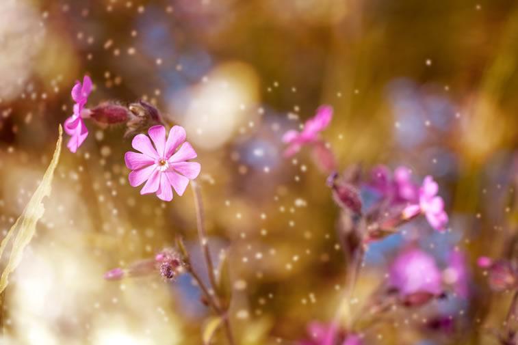 Der violette Blume